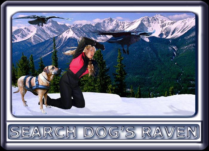 Ravens swoop down on a young woman and her search dog on a mountain cliff.  The dog is a Rhodesian ridgeback cross, with a black muzzle, dark ears and reddish tan fur.  Wearing a black search suit, with orange trim, the attractive handler has long blonde hair.