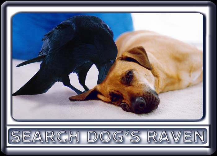 As a raven nuzzles her head, Ebbey the search dog lies on a carpet.  The dog is a Rhodesian ridgeback cross, with a black muzzle, dark ears and reddish tan fur.  The older raven is slightly larger than the dog's head.