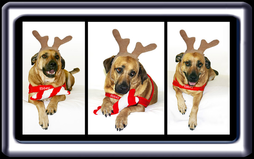 Three Christmas Spirits of Ebbey the Canine Actor